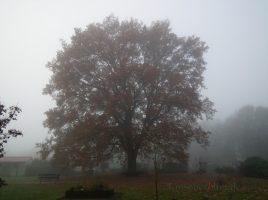 Die SPD möchte den Zugang zur Natur und Naherholung in Holzwickede stöärken und schlägt al eine erste Maßnahme die Sanierung der Wege zur Kleingartenanlage Am Oelpfad vor. (Foto: P. Gräber - Emscherblog.de)