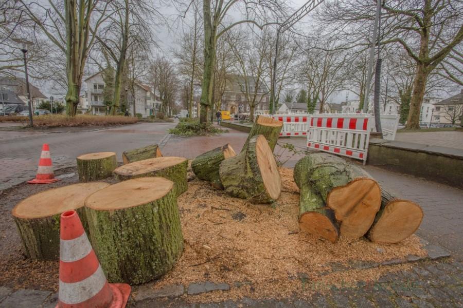 Nach dem Sturmtief Friederike war dieser Baum in der Allee nicht mehr standsicher. Ein Trupp des Baubetriebshofes gaben dem Baum heute den Rest. Für eine Ersatzpflanzung wird gesorgt. (Foto: P. Gräber - Emscherblog.de)