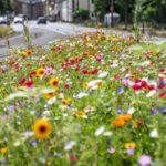 Baubetriebshof legt Grünflächenaktionsplan vor: Gemeinde setzt auf Wildblumen