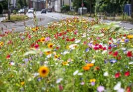 Pflegeleichte Wildblumenwiesen sollen vorhandene Bepflanzung ersetzen. (Foto: Gemeinde Holzwickede)