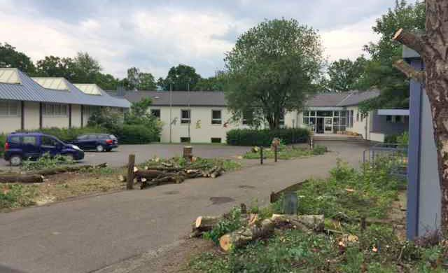 Gewöhnunsbedürftiges Bild: Alle Bäume, die dem Umbau weichen müssen, sind seit heute gefällt. Foto: privat)