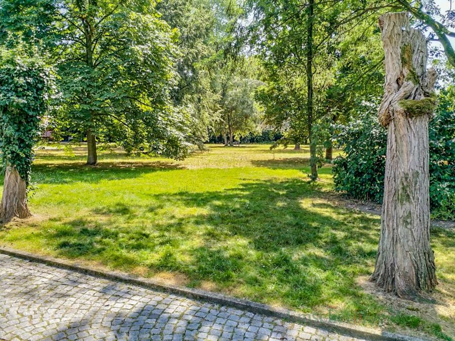 Auf dieser Fläche im Emscherpark wird die vierzügige AWO-Kita nun errichtet. Der Baumbestand soll weitgehend erhalten bleiben. (Foto: P. Gräber - Emscherpark)
