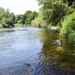Wenig Wasser in kleinen Bächen: Für Fische wird es stellenweise eng