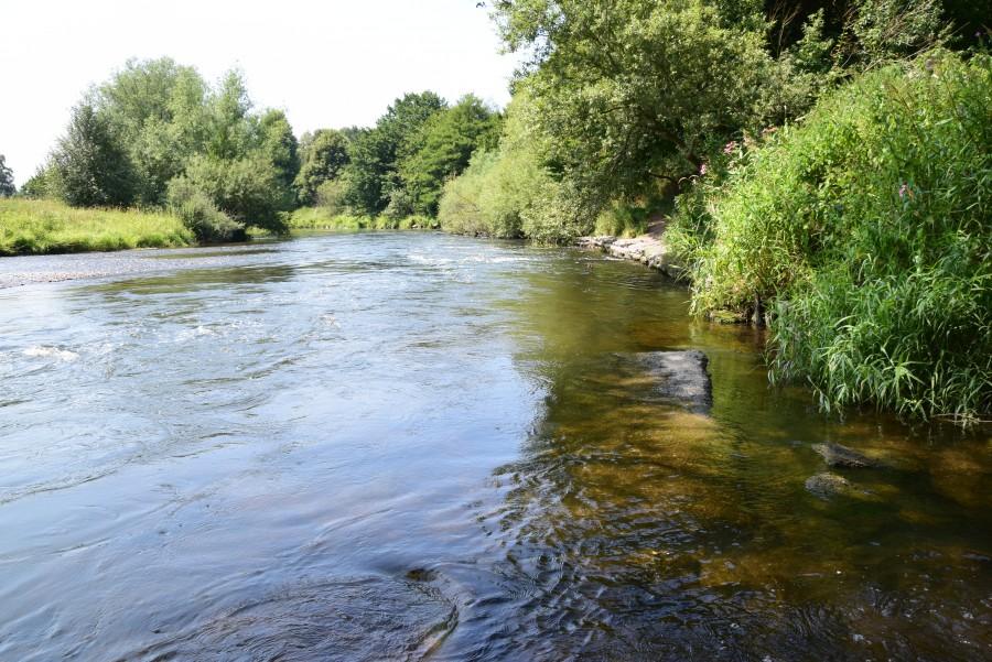 """Die Ruhr als großer Fluss, hier mit dem Zufluss """"Mühlenstrang"""" bei der Rohrmeisterei in Schwerte, führt nocjh genug Wasser. (Foto: Max Rolke - Kreis Unna)"""
