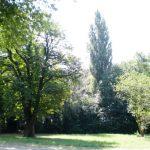 Grüne lehnen Fällung von elf Bäumen für neue Kita ab