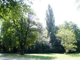 Das Grundstück im Emscherpark, auf dem die neue Kita errichtet werden soll. (Foto: Gemeinde Holzwickede)