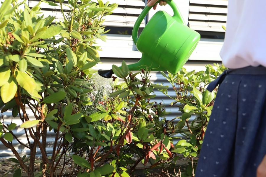 Mitarbeiter der UNIQ GmbH haben heute die Bäume und Sträucher am Rhenus-Platz bewässert. (Foto: UNIQ GmbH)