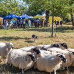 Herbstfest auf dem Emscherquellhof: Gelungene Premiere für wewole-Stiftung