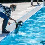 """""""Schöne Flöte"""" beendet rekordverdächtige Saison mit Hundeschwimmen"""