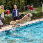Hundeschwimmen zum Ausklang der Freibadsaison in der Schönen Flöte