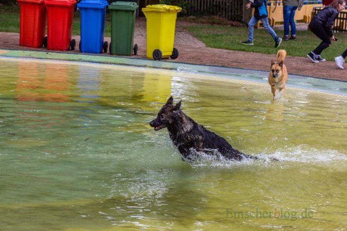 Vierbeiner und Zweibeiner genossen gleichermaßen das Hundeschwimmen an diesem Wochenende in der Freizeitanlage Schöne Flöte. (Foto: P. Gräber - Emscherblog.de)