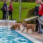 Badespaß für Vierbeiner im Freibad Schöne Flöte