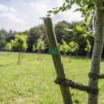 Bäume leiden unter Klimastress: Die Grünen laden zur Diskussion