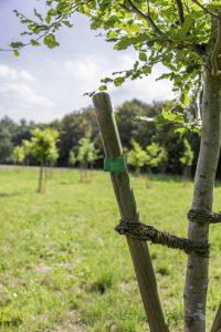 Im Bürgerwald am Oelpfad sind etliche Bäume der Trockenheit zum Opfer gefallen. Die Grünen wollen jetzt etwas dagegen tun. (Foto: P. Gräber - Emscherblog)