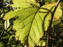 Blätter Laub, (P. Gräber - Emscherblog.de)