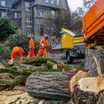Baumfällung im Ortskern Auftakt zum großen Stühlerücken der Verwaltung