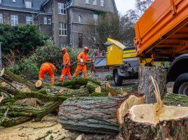 Baumfällen in der Poststraße für das neue Rat- und Bürgerhaus. (Foto: P. Gräber - Emscherblog)