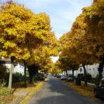 Umweltausschuss entscheidet über umfangreichen Baumbestand im Ortskern