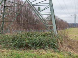 Westnetz schneidet aktuell auch in Holzwickede Bäume und Sträucher unter den Freileitungen. (Foto: P. Gräber - Emscherblog.de)