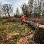 Bäume im Baufeld der geplanten Kindertagesstätte sind gefällt