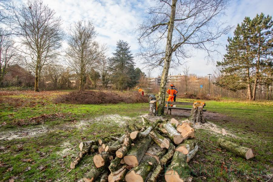 Blick auf das Baufeld der Kita: Die Birke im Vordergund und die Lärche hinten rechts wurden ebenfalls noch gefällt. (Foto: P. Gräber - Emscherblog.de)