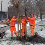 Baubetriebshof auf Pflanztour: Gemeinde bekommt 46 neue Bäume