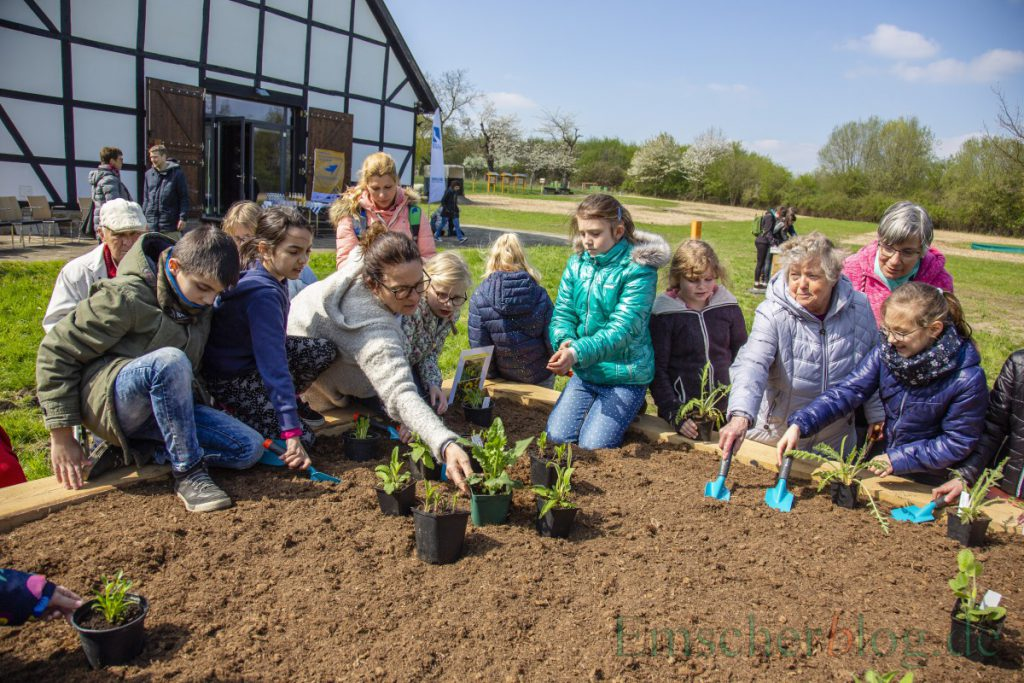 Kinder der Natur AG der Dudenrothschule und Senioren des Perthes-Hauses bepflanzen ein Hochbeet am Emscherquellhof. (Foto: P. Gräber - Emscherblog)