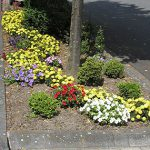 Gemeinde sucht engagierte Paten für Baumbeete und Grünflächen