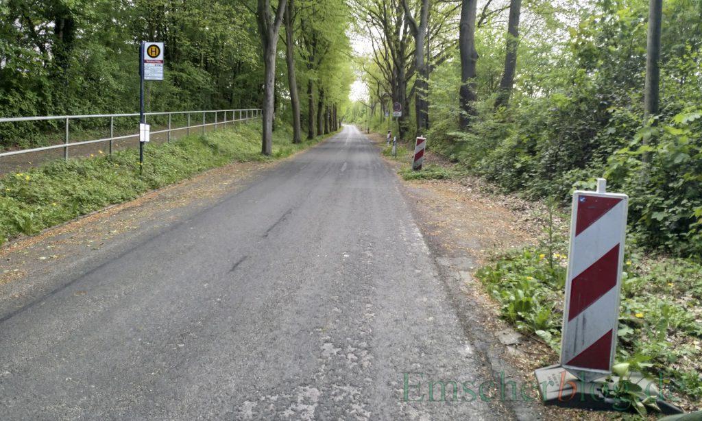 Die Steinbruchstraße wird noch dieses Jahr  wochenlang komplett gesperrt: Die Fahrbahn wird auf 5,5 m verbreitert. Mehr als zwei Dutzend Bäume auf der westlichen Seite sind schon voriges Jahr gefällt worden.  (Foto: P. Gräber - Emscherblog)