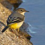 Tag der Artenvielfalt: Renaturierung haucht Emscher neues Leben ein
