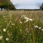 Kompensationsmaßnahmen: Kreis sorgt für blühende Landschaften