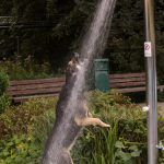Tierheim vorübergehend geschlossen: Tiere an heißen Tagen schonen