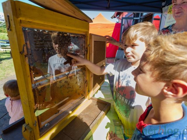 Am Stand des Imkervereins konnten die Besucher das muntere Treiben der Bienen im Bau verfolgen und die Königin ausfindig machen.  (Foto: P. Gräber - Emscherblog)
