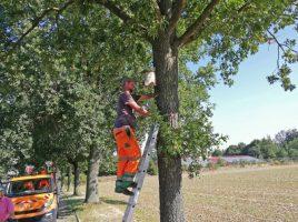 Mitarbeiter des Baubetriebshofes haben heute 30 Vogelnistkästen am Oelpfad und der Talstraße aufgehängt. (Foto: Gemeinde Holzwickede)