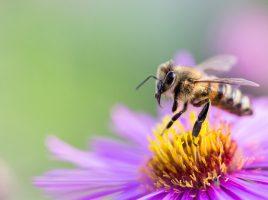 Im Frühjahr 2014 wurden am Dortmunder Flughafen drei Bienenvölker angesiedelt. (Symbolbild: Andreas Breitling - Pixabay)