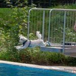 Schönstes Badewetter beim Hundeschwimmen in der Schönen Flöte