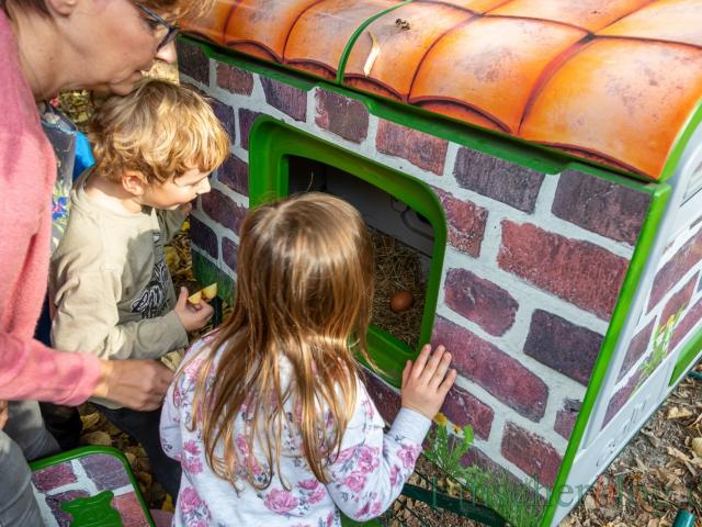 Das Familienzentrum Löwenzahn hat für zwei Wochen vier Hühner gemietet - zur großen Begeisterung aller Kinder. (Foto: P. Gräber - Emscherblog.de)