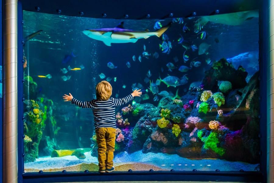 Im Sea Life Oberhausen können große und kleine Besuchern auch ein Unterwasser-Panorama bestaunen. (Foto: Sea Life)