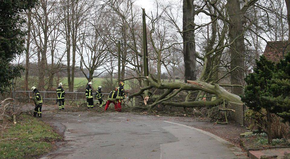 Das Sturmtief Sabine sorgte für einen Dauereinsatz der Holzwickeder Freiwillige Feuerwehr. Zumeist waren umgestürzte Bäume zu beseitigen oder abzusichern, wie hier an der Mühlenstraße. Insgesamt fielen die Schäden aber geringer aus als zu befürchten stand. (Foto: privat)