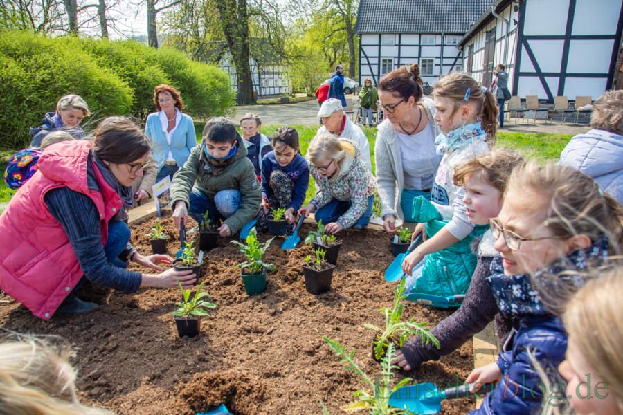 Im Rahmen seiner Biodiversitätsinitiative setzt der Wasserverband auch auf  kleinere Sofortmaßnahmen, wie Boden- und Pflanzaktionen: hier mit Kindern der Dudenrothschule am Emscherquellhof. (Foto: P. Gräber - Emscherblog)