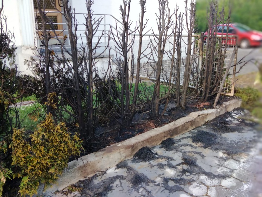 as nennt man wohl Kollateralschaden: die abgebrannte Hecke in der Massener Straße. (Foto: privat)