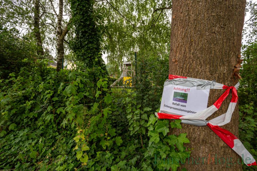 Der von den Giftraupen befallene Baum steht nur wenige Meter vom Spielplatz Schwarzer Weg entfernt . Dennoch hält die Umweltbeauftragte der Gemeinde eine Beseitigung der Raupen für nicht erforderlich. (Foto: P. Gräber - Emscherblog)