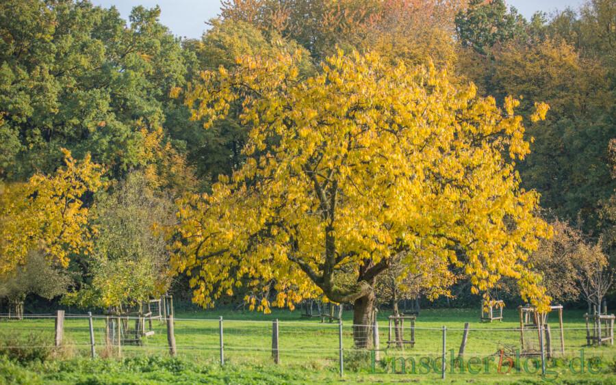 Jedes Jahr werden auf Initiative des Kreises Unna Baumreihen, Hecken, Obstwiesen oder Feldgehölze in große,m Umfang angepflanzt: Obstwiese am Haus Opherdicke. (Foto: P. Gräber - Emscherblog)