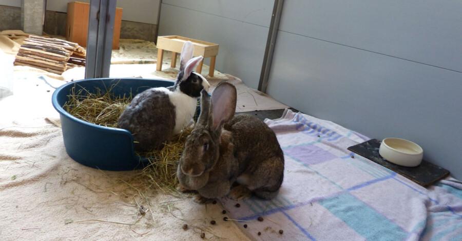 Die Hasen Semmel und Knödel suchen ein Zuhause. (Foto: Kreis-.Tierheim)
