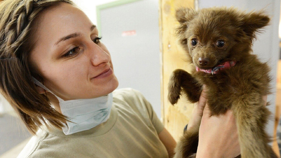 Auch Hunde können sich mit dem Corona-Virus SARS-CoV-2 infizieren. Allerdings sind Hunde weniger anfällig für Infektionen als andere Haustiere. (Symbolbild: Pixabay)