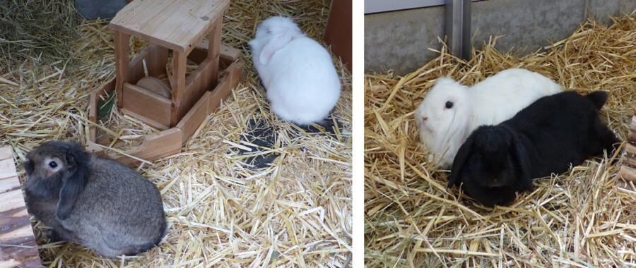 Tiere der Woche: Zwei Kaninchenpaare zu vermitteln