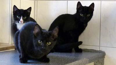 Die Katzen Bart, Lisa und Maggie suchen neues Zuhause. (Foto: Kreis-Tierheim)