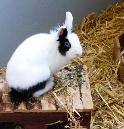 Sucht ein liebevolles neues Zuhause: die Kaninchendame Ahsoka. (Foto: Tierheim Kreis Unna)