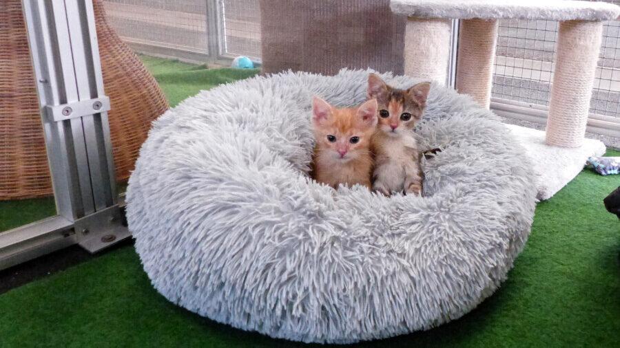 Die beiden am 23. August geborenen Katzenkinder Mario und Peach suchen ein neues Zuhause. (Foto: Tierheim Kreis Unna)