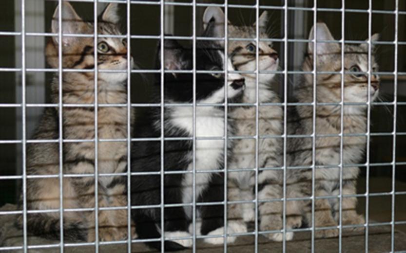 Katzen wurden in 2019 besonders viele vermittelt: Junge Kätzchen im Kreis-Tierheim. (Foto: Tierheim Kreis Unna)
